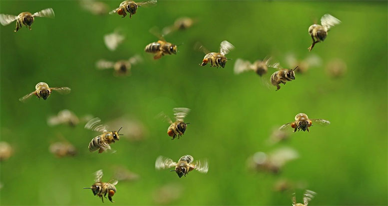 London Bee Control Experts