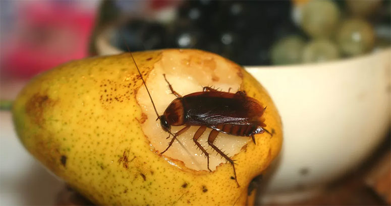 London Cockroach Control Experts